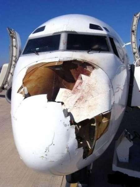Безопасность полетов зависит от птиц